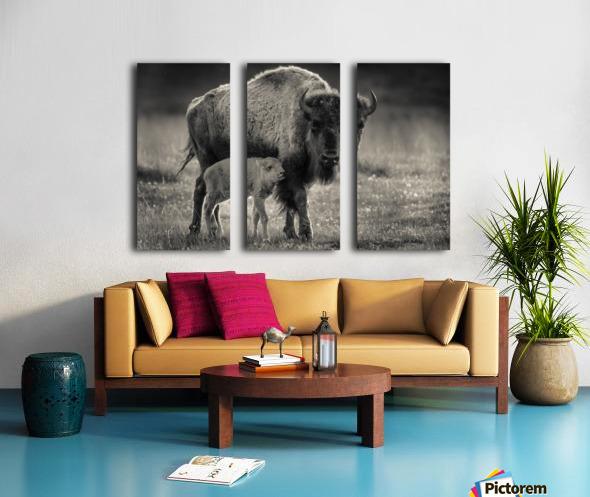 Bison love Split Canvas print