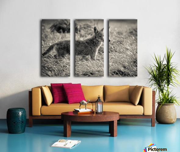 Coyote  Split Canvas print