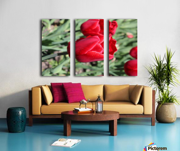 Tulips Red Split Canvas print