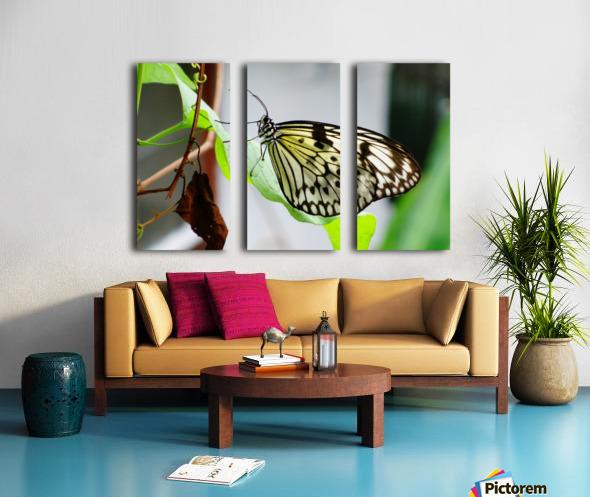 Resting Butterfly Split Canvas print