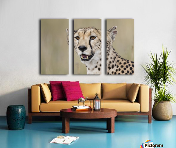 Cheetah Portrait by www.jadupontphoto.com Split Canvas print