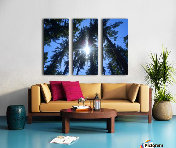Weyerhaeuser Tree Split Canvas print