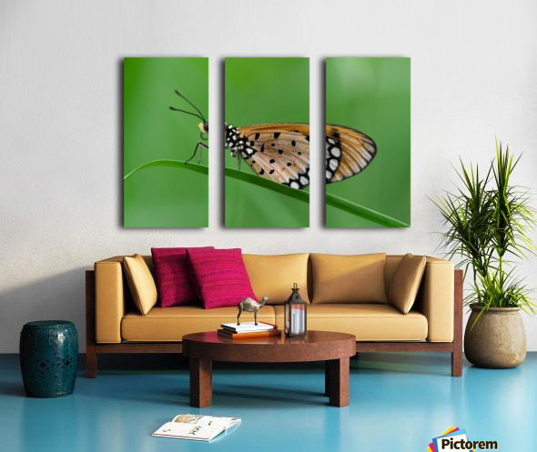 Butterfly Split Canvas print