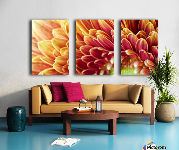 Golden Chrysanthemum Split Canvas print