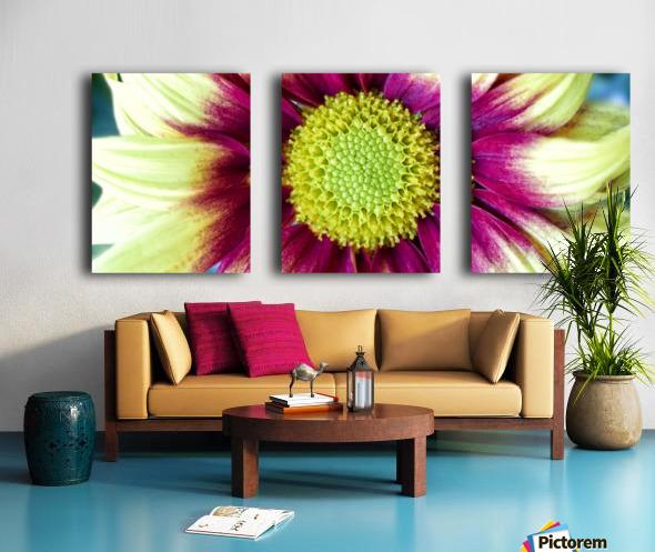 Chrysanthemum Daisy Split Canvas print