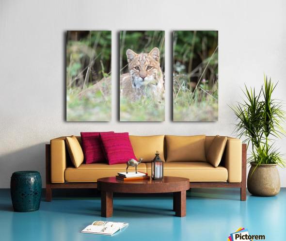 Curious Bobcat Split Canvas print