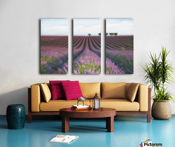 Velours de Lavender Split Canvas print