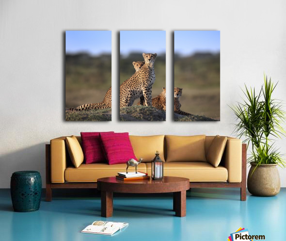 Cheetahs Family Split Canvas print