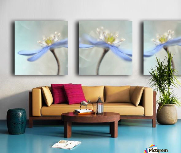 Dancing anemones Split Canvas print
