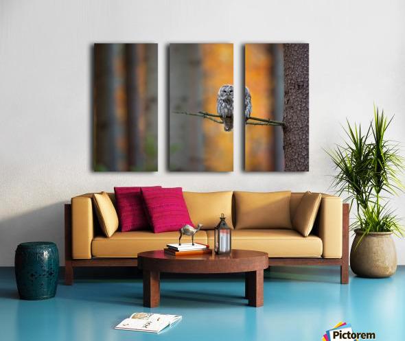 Tawny Owl Split Canvas print