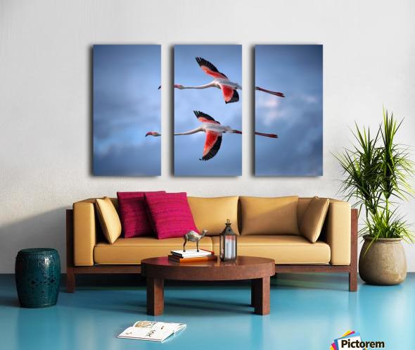 Greater Flamingos Split Canvas print
