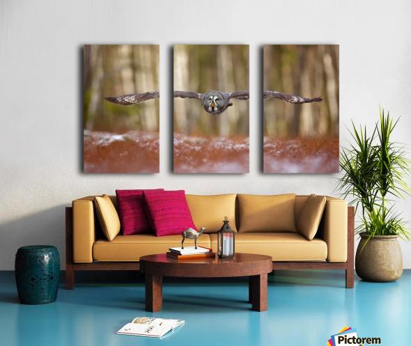 Great grey owl Split Canvas print