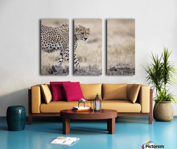 Cheetah Bro Split Canvas print