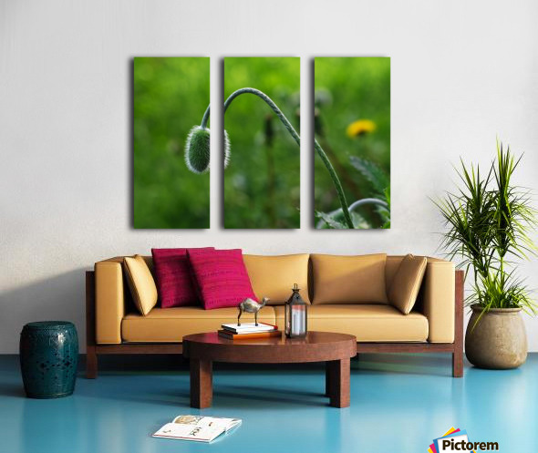 Poppy is waiting to opening day Split Canvas print