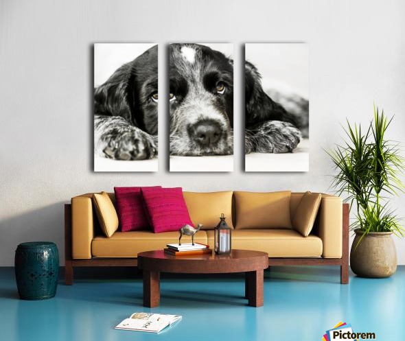 Cute Cocker Spaniel Puppy Split Canvas print