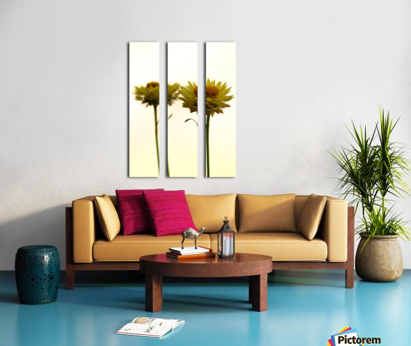 Mellow yellow Split Canvas print