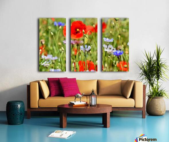 alpine cornflower, cornflowers, flowers, centaurea montana, field of flowers, poppy, composites, flora, wild plant, plant, flower garden, wild flower, garden, flower meadow, petal, meadow, nature, Split Canvas print