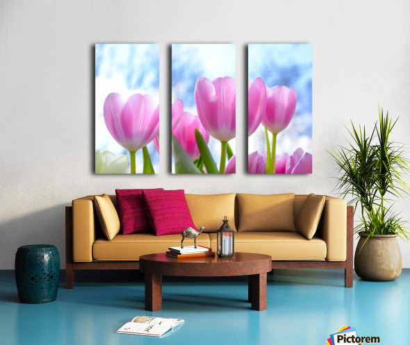 nature, tulip, flora, flower, summer, bright, petal, season, color, floral, growth, blooming, freshness, Split Canvas print