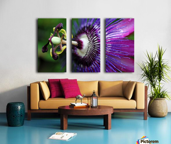 Passion Flower In Purple Split Canvas print