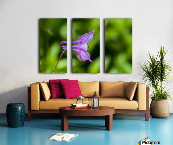 Purple Columbine 2 Split Canvas print