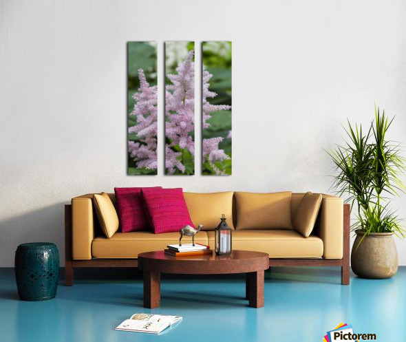 Pink Astilbe 1 Split Canvas print
