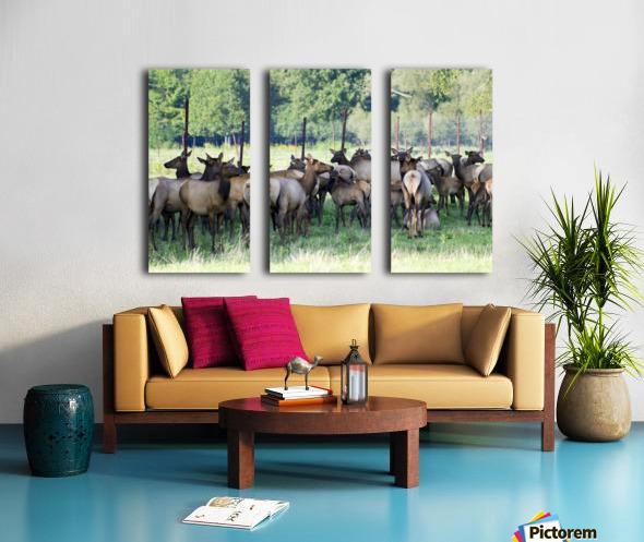 Elk Red Tailed Deer or Wapiti 16 Split Canvas print