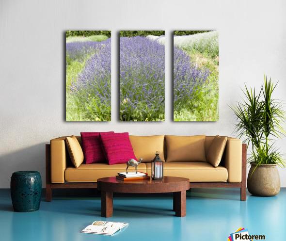 Lavender plants 1 Split Canvas print