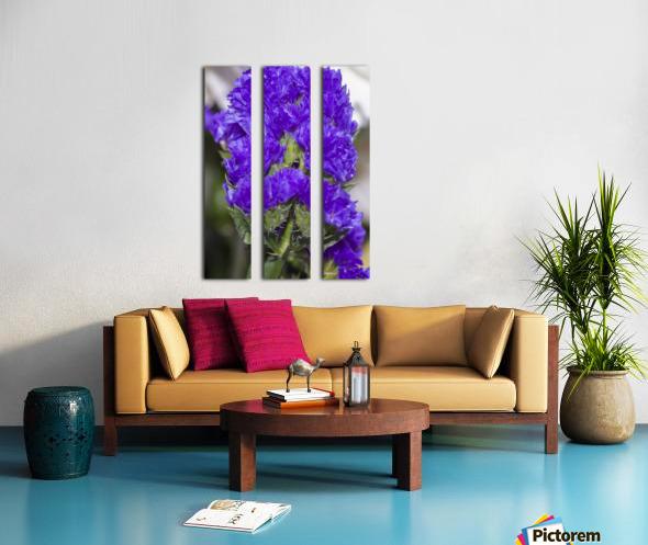 Purple Statice Flower Split Canvas print