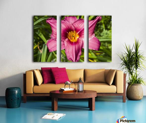 Purple Stella Doro Day Lily Flowers 2 Split Canvas print
