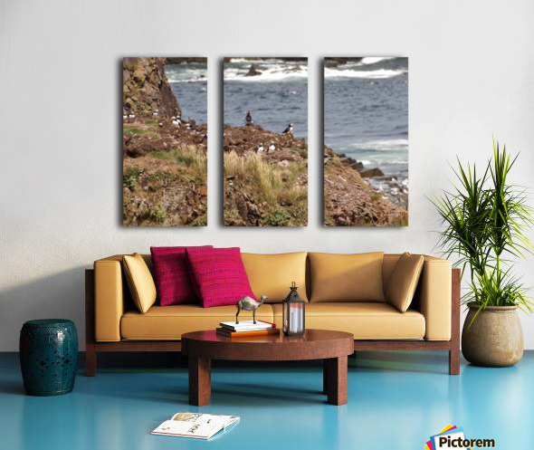 Puffins being puffins 15 Split Canvas print