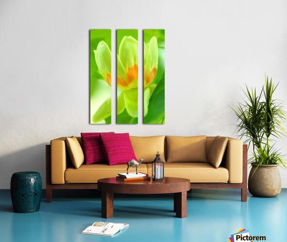Tulip Poplar Flower Split Canvas print
