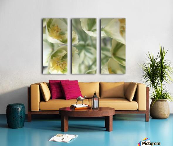 IMG_3383 Split Canvas print