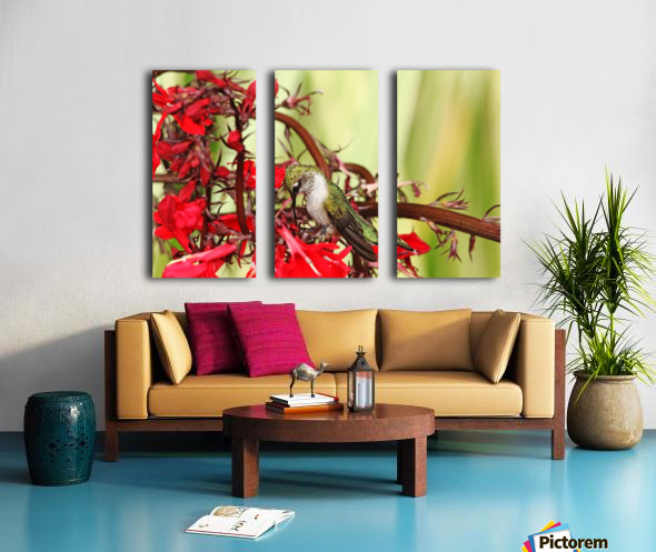 Hummingbird Giving Thanks Split Canvas print