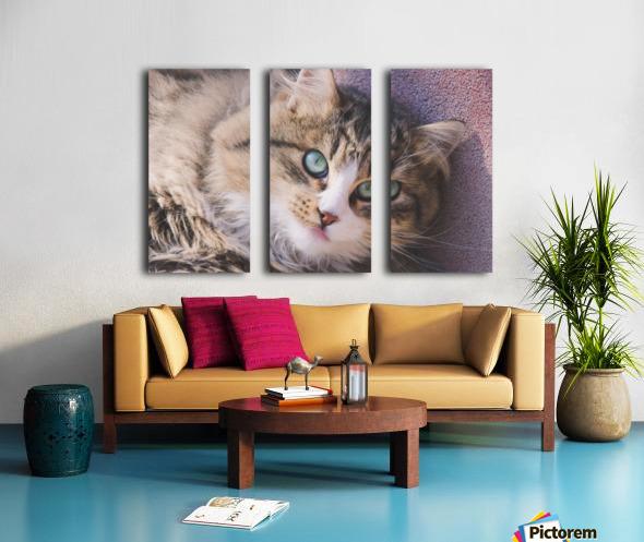 March Cat Split Canvas print