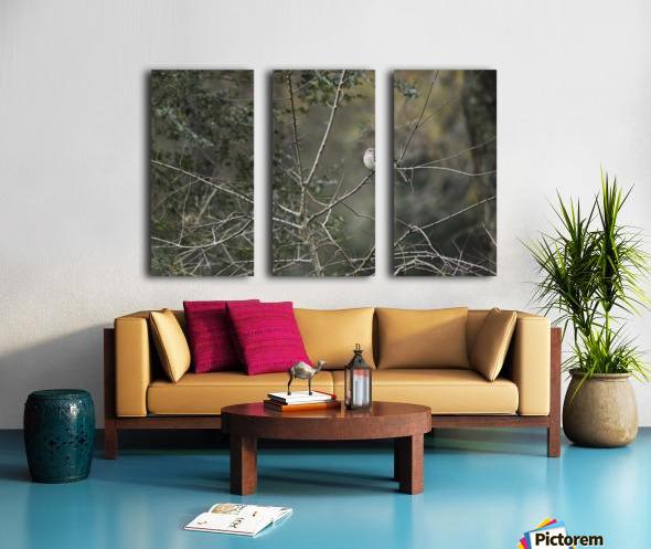 Resting Mockingbird Split Canvas print