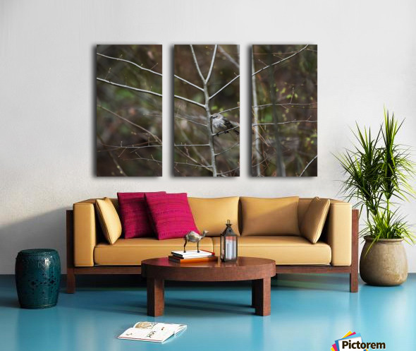 Yellow-rumped Warbler 2 Split Canvas print
