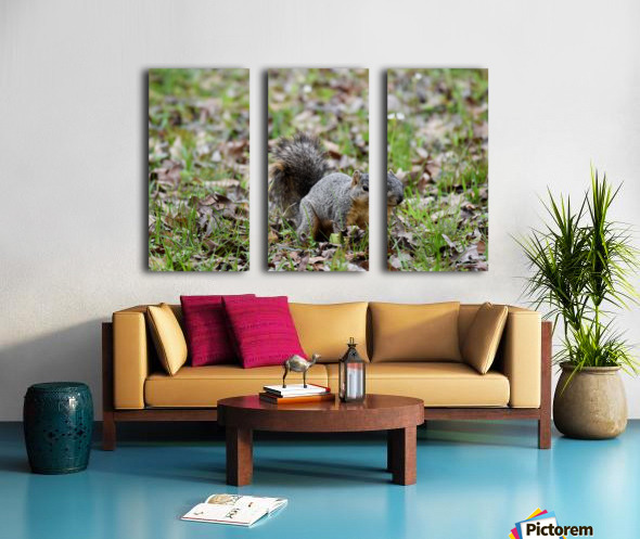 Squirrel 2 Split Canvas print