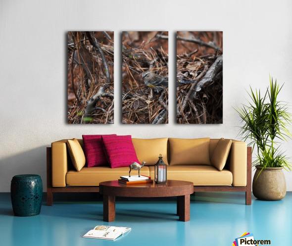 Yellow-rumped warbler Split Canvas print