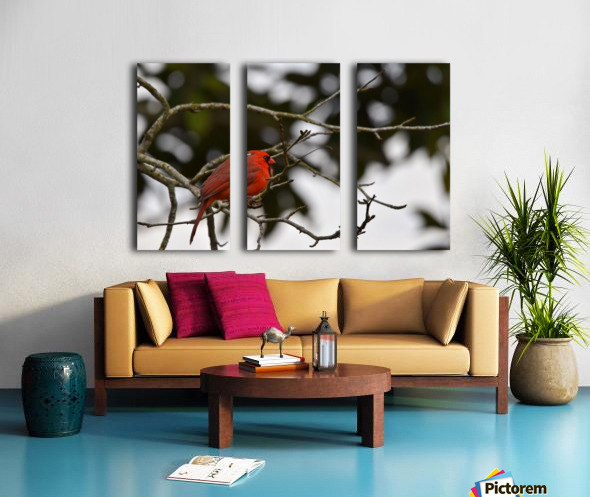 Cardinals 4 Split Canvas print