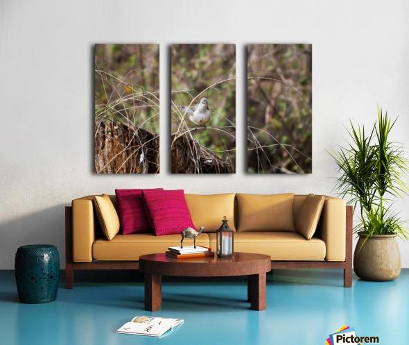Angry Mockingbird 3 Split Canvas print