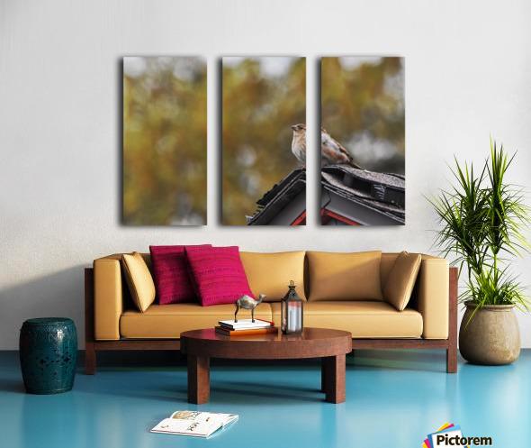 DSC_0026 Split Canvas print