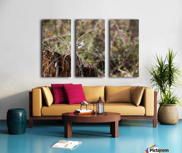 Angry Mockingbird 2 Split Canvas print