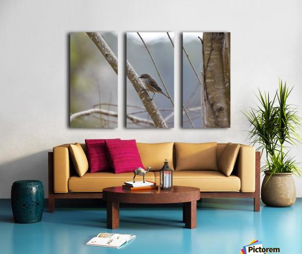 Yellow-rumped Warbler 4 Split Canvas print