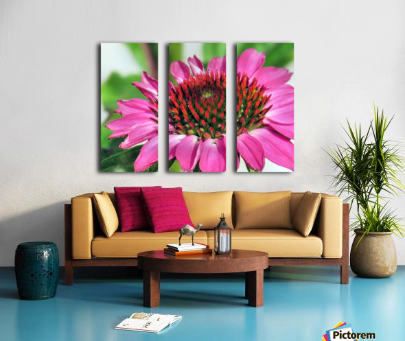 Pink coneflower  Split Canvas print
