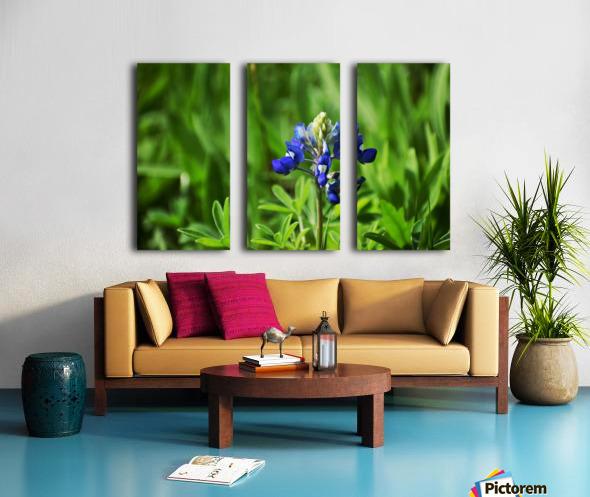 Texas Blue Bonnets Split Canvas print
