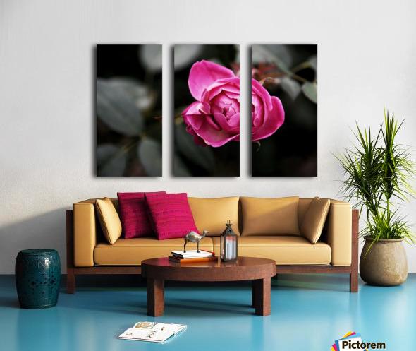Single Rose Split Canvas print