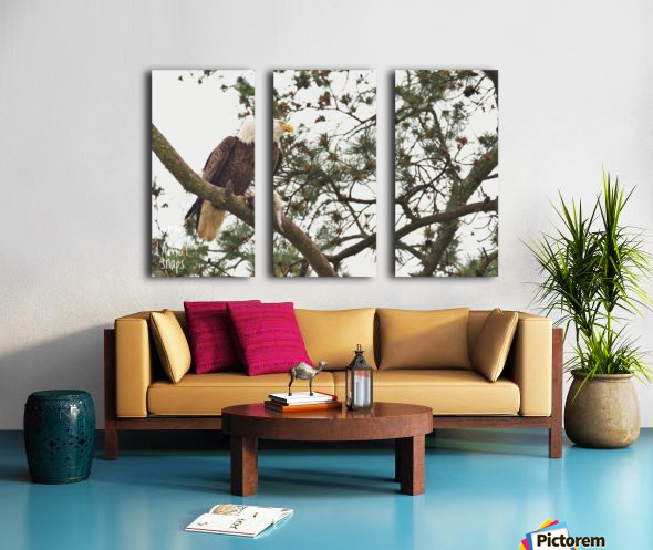 Eagles in Houston Split Canvas print