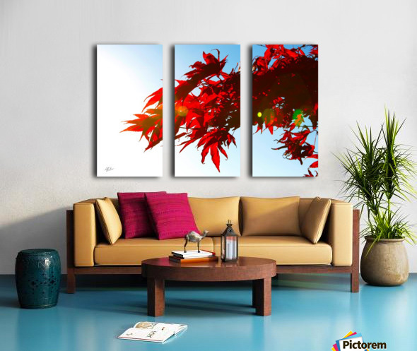 Chinese Maple Split Canvas print