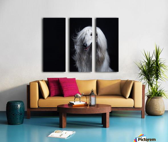 Afghan Hound Portrait Split Canvas print