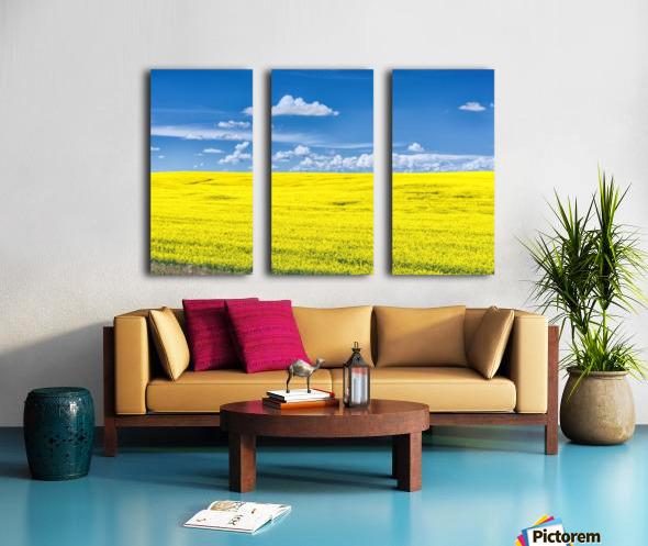 Canola Field  Split Canvas print